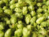 """Hop Farms & How to Grow Hops in New England"""